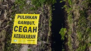 Alasan BRG Dukung Jokowi Konversi Lahan Gambut Jadi Sawah