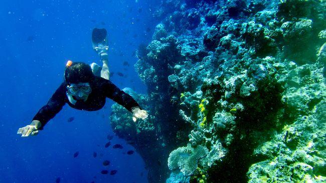Pemandangan bawah laut Indonesia memang indah bak surga. Mirisnya, saat ini kerusakan terumbu karangnya sudah mencapai 46 persen.