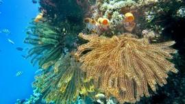 10 Spesies Baru di Laut Selatan Jawa, Ada Kecoak Raksasa