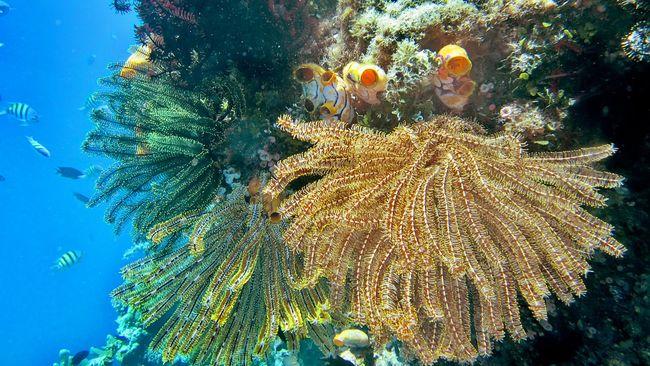 Peneliti Indonesia menemukan 10 spesies baru biota laut yang diidentifikasi dalam Ekspedisi Biodiversitas Laut Dalam Selatan Jawa.
