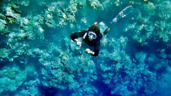 UNESCO menetapkan Bunaken, Karimunjawa, dan Merapi-Merbabu-Menoreh sebagai cagar biosfer baru di dunia.