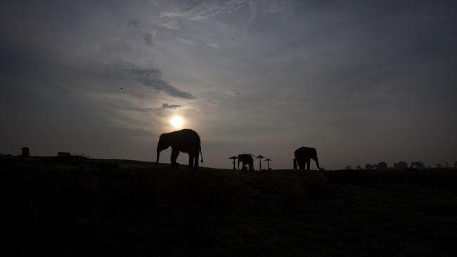 Warga Lampung pada Kamis (28/1) malam, dihebohkan oleh suara dentuman misterius yang belum diketahui asal dan penyebabnya sampai saat ini.