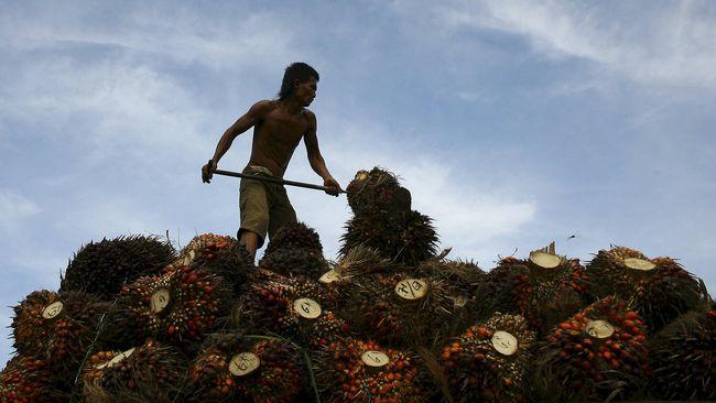 Industri kelapa sawit mewaspadai dampak berlarutnya perang dagang Amerika Serikat-China yang akan menyeret harga komoditas ke level rendah.