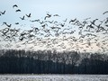 Ahli LIPI: Burung Mati Massal Mungkin Terkait Perubahan Iklim