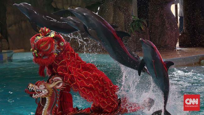 Taman Impian Jaya Ancol mengaku mengikuti aturan internasional. Namun, mengapa beredar foto lumba-lumba hanya berselimutkan handuk basah?
