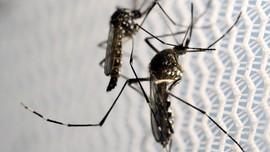 Zika Ditemukan di India, Dunia Kembali Diminta Waspada