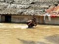 Banjir Aceh Timur Capai 2 Meter, 10 Ribu Orang Mengungsi