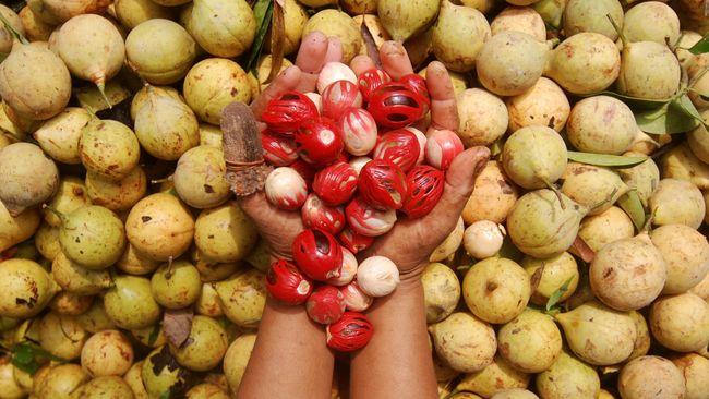 Provinsi Sulawesi Utara mengekspor biji pala senilai US$147,2 ribu ke Singapura dan Belanda pada akhir 2020.