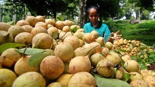 Produsen Pala Belanda Bakal Investasi Rp4,2 T di Papua Barat