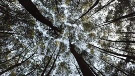 Pasien Corona Gunung Kidul Akan Diisolasi di Hutan