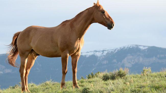 Tafsir mimpi bertemu kuda dalam togel