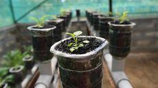 Cara Berkebun di Halaman Rumah yang Sempit