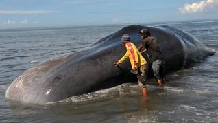 Polusi Suara dan Sampah Ancam Mamalia Laut di Perairan RI