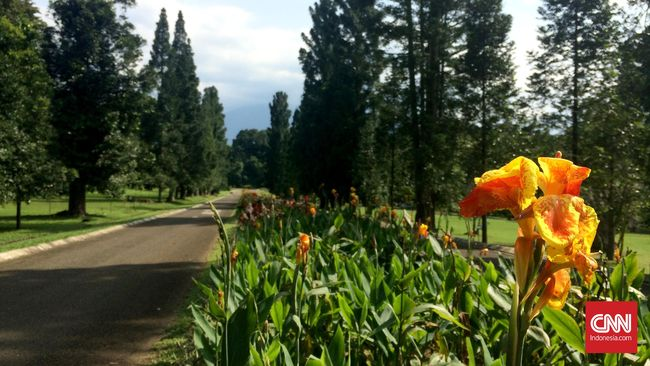 LIPI mengatakan jumlah peneliti di Indonesia tidak sebanding dengan kekayaan jenis flora yang ada.