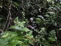 Gereja Duga Pendeta Tewas di Intan Jaya Papua Ditembak TNI