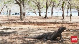 'Jurassic Park' NTT & Ancaman Hewan Purba Komodo Pulau Rinca