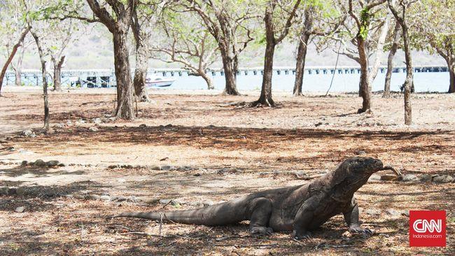 Mengenal proyek 'Jurassic Park' di Taman Nasional Komodo, NTT yang ramai diperbicangkan di media sosial.