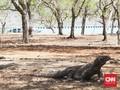 Mencari Metode Pelestarian Pulau Komodo