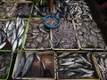 Cegah Asma dengan Konsumsi Ikan