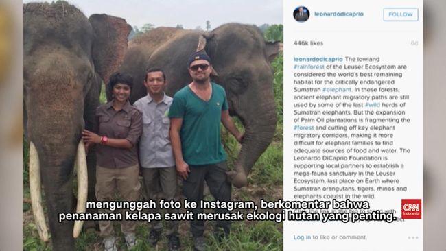 Hutan Indonesia Muncul di Film Dokumenter Leonardo DiCaprio
