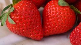 Mengenal Diet Tinggi Serat untuk Cegah Kanker
