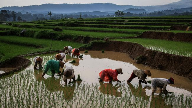 Hasil kajian sementara KPK menunjukkan setiap tahun sebanyak 50-60 ribu hektare lahan sawah telah dialihfungsikan untuk pembangunan.