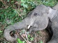 Lebih dari 300 Gajah di Bostwana Mati Secara Misterius
