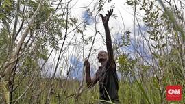 FOTO: Sisa Cerita 'Gubuk' Penyulingan Kayu Putih Pulau Buru