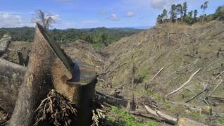 Sebab Hutan di Pulau Jawa Semakin Mengecil 24 Persen