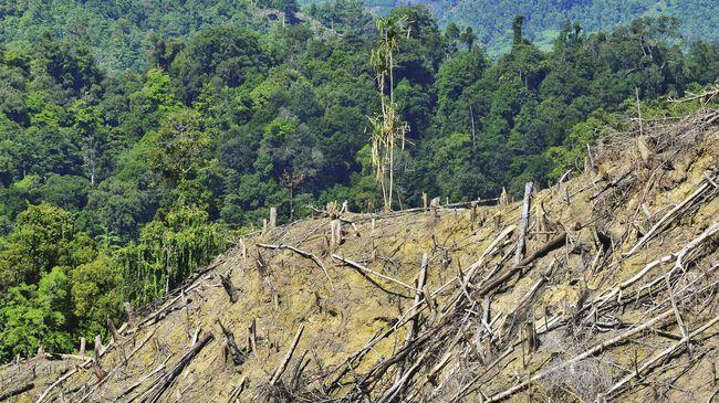 Mereka menganggap RUU Omnibus Law mengancam kelestarian lingkungan, mengancam warga adat serta cacat hukum.