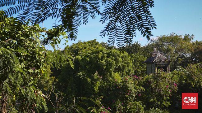 Ada 8 spesies tumbuhan unik dari belantara Indonesia menjadi penemuan baru dua peneliti LIPI sepanjang 2020.