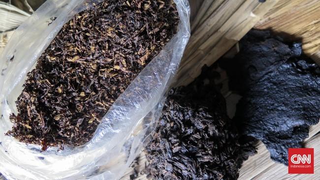 Polisi Bongkar Pabrik Rumahan Tembakau Gorila di Banten
