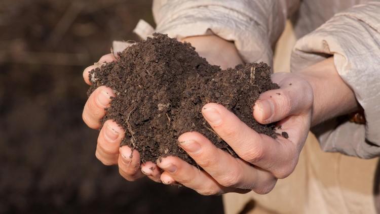Berkebun adalah kegiatan sederhana yang nyatanya punya banyak manfaat lho buat si kecil. Apa saja ya manfaatnya?