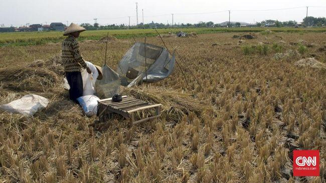 Para petani Telukjambe Barat, Karawang melaporkan dugaan intimidasi aparat terhadap mereka ke Kantor Staf Presiden terkait konflik lahan di tiga desa.