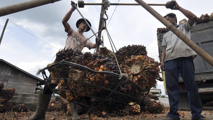 Mendag Tegur India Soal Upaya Jegal Produk Kelapa Sawit RI