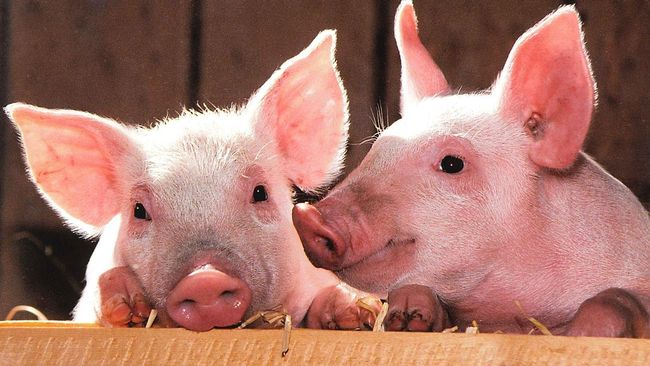 Produsen makanan China mengatakan bahwa jejak virus flu babi Afrika ditemukan dalam sebuah pangsit beku.