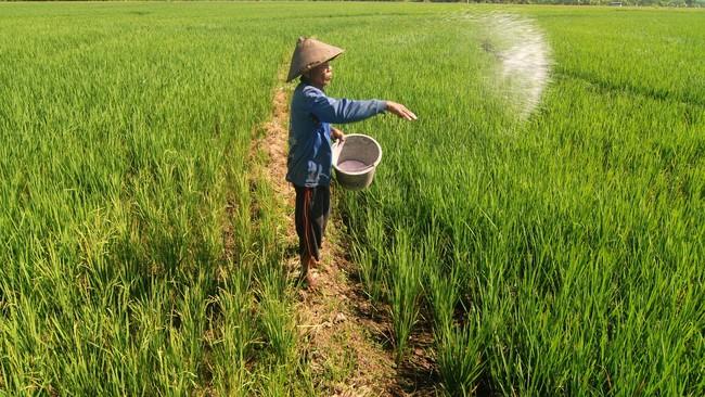Musim tanam, Pupuk Indonesia Perkuat Stok Gudang Kabupaten