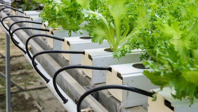 Dubai Bakal Bangun Pertanian Vertikal Terbesar di Dunia