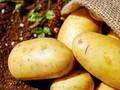 7 Jenis Makanan Berkarbohidrat yang Aman Dikonsumsi