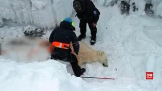 Wisata Arktik Meningkat, Nasib Beruang Kutub Terancam
