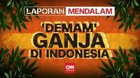 'Demam' Ganja di Indonesia
