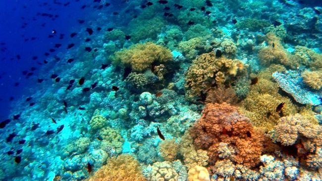 Peneliti gabungan dari Indonesia dan Singapura menemukan 12 spesies baru hewan bawah laut di laut Jawa bagian barat dan selatan.