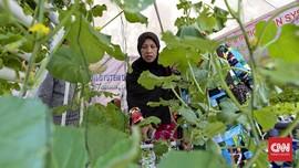Mengenal Macam-macam Tanaman Hortikultura