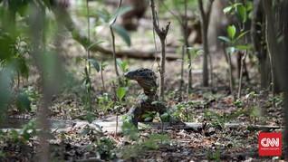 Kebakaran 10 Hektare Sabana TN Komodo, Penyebab Masih Diusut
