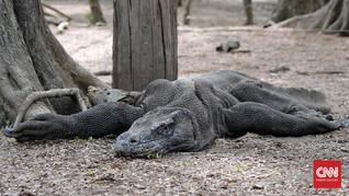 Warga Lokal Minta UNESCO Turun Tangan soal Jurassic Park NTT