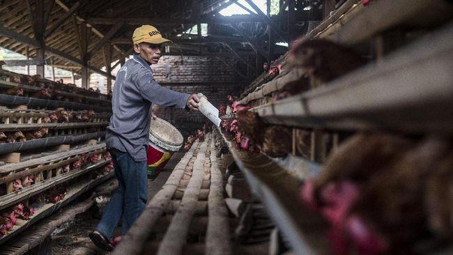 Pemerintah telah menyalurkan 33,63 persen alokasi KUR ke sektor peternakan hingga Maret 2020.