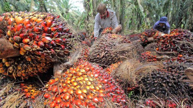 Presiden Joko Widodo mengakui pemerintah kesulitan untuk mendongkrak harga CPO walaupun sudah melakukan banyak upaya untuk mendongkraknya.