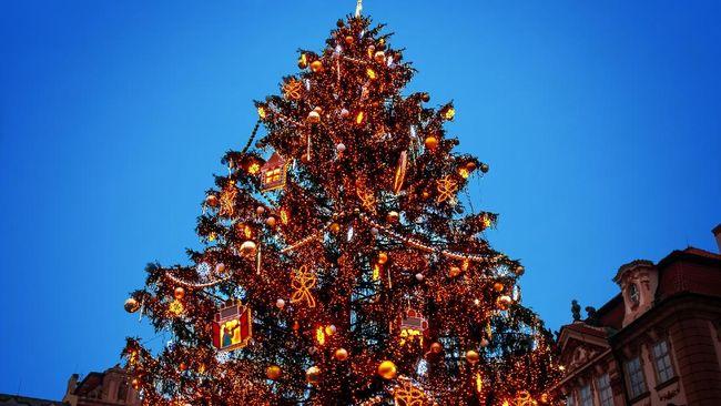 Akun Instagram @christmastreehair memuat tak kurang 641 foto rambut pohon Natal yang dipamerkan oleh anak-anak sampai orang dewasa.