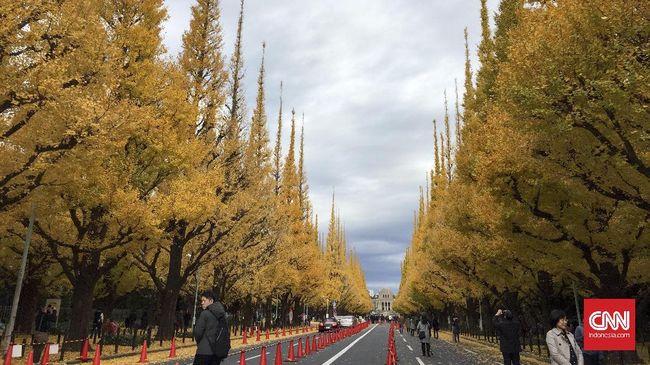 Dedaunan berwarna oranye yang berjatuhan menjadi pemandangan romantis di musim gugur yang diincar turis.