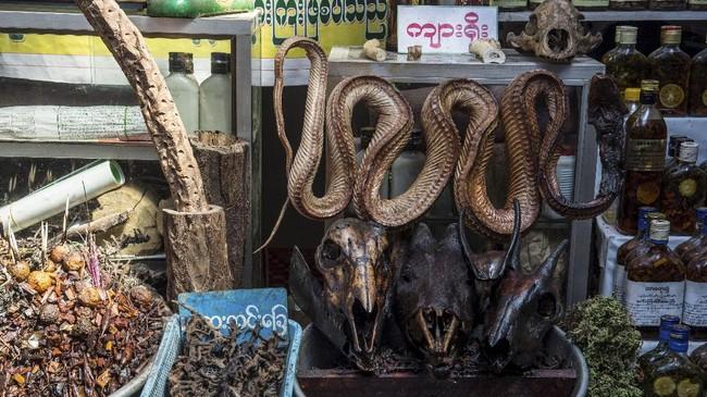 Mencari Kesembuhan dari Obat Tradisional Myanmar